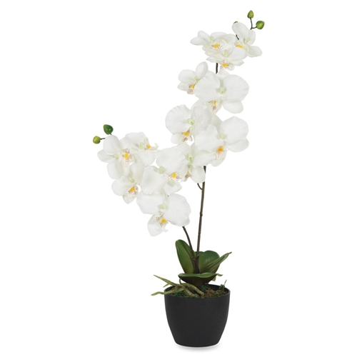 Exponent Microport White Orchid